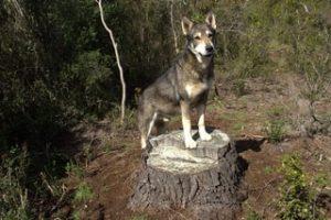 Dog Standing on Tree Stump