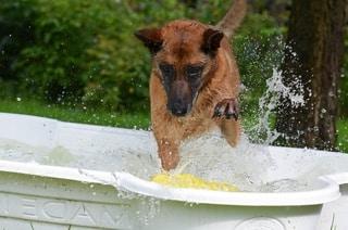 One Dog Bone Pool