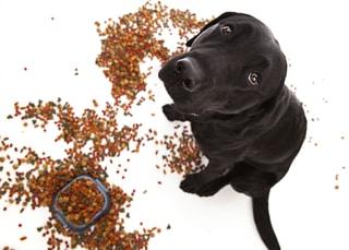 Dog Food All Over Floor