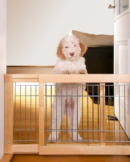 Dog Standing at Gate