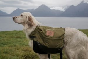 Setter with Backpack