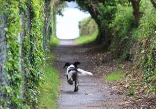 Dog Running Loose
