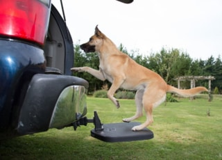 Heininger 3062 Portable PET Twistep Dog Hitch Step German Shepherd