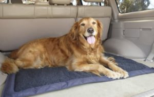 Lightspeed Outdoors Self Inflating Travel Dog Bed