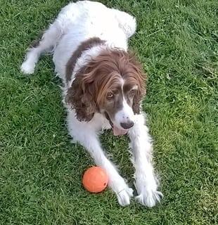 Keats with Planet Dog Orbee Tuff Diamond Ball