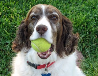 Keats with Tennis Ball