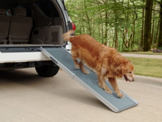 Best Portable Dog Ramp for Cars